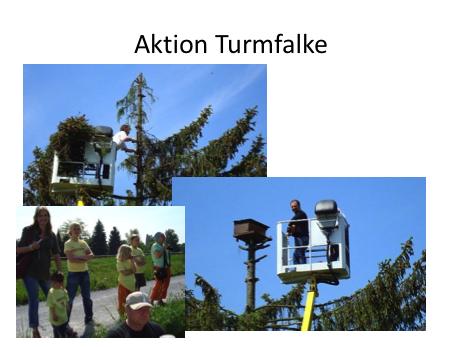 Aktion Turmfalke1
