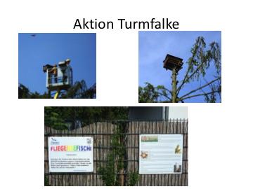 Aktion Turmfalke2